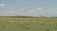 Stock Video Footage of Wildebeest P2