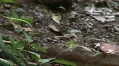 snake striking - stock footage