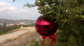Roadside Christmas Trees In Austin, Texas Footage