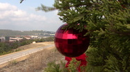 Stock Video Footage of Roadside Christmas Trees In Austin, Texas