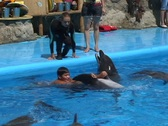 Boy swimming with Dolphins  Stock Footage