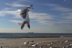 Seagulls on the beach  - stock footage