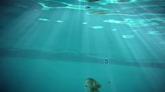 underwater swimming 3 year old-22B - stock footage