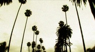 Los Angeles palm trees & sky dolly Stock Footage