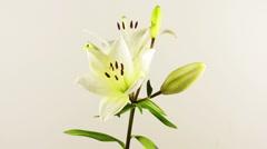 Flower wallpaper01 Stock Footage
