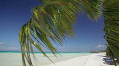 Palm leaf moving in the wind on beach Stock Footage