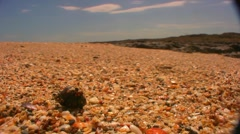 Hermit Crab Chase  - stock footage