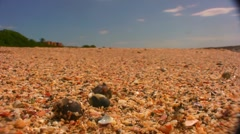 Hermit crab scurry - stock footage