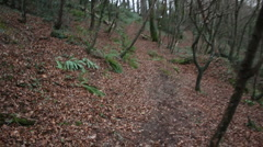 Walking through a beech wood in Cornwall, UK Stock Footage