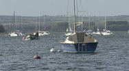 Stock Video Footage of A motorboat passes yachts moored to buoys on Rutland Water.
