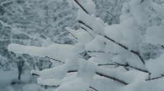 Stock video footage winter frost forest snow Stock Footage