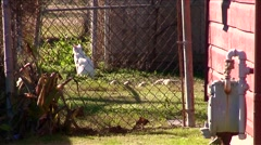 New Orleans-katrina-cat Stock Footage