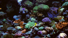 fishtank - stock footage
