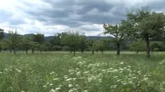 Apple orchard biodynamic Stock Footage