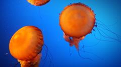 Orange Jellyfish Stock Footage