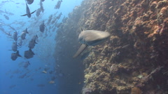 Shark surprise Stock Footage