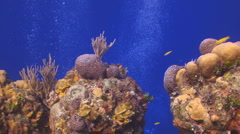 Coral reef Cozumel - stock footage