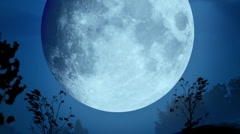 Night forest Stock Footage