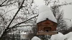 Bird feeding in winter 1 Stock Footage