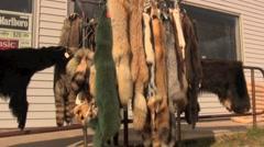 Animal Furs 3 Stock Footage