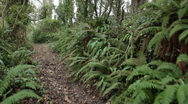 Walking along a woodland path with ferns, Cornwall, UK Stock Footage