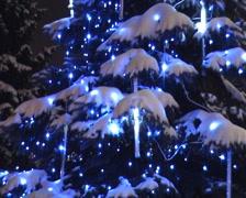 Christmas fur-tree - stock footage