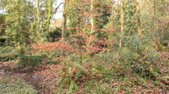 Woodland in the winter, Cornwall, UK Stock Footage