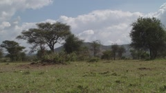 Africa Trees Blowing in the Breeze  (HD) Stock Footage
