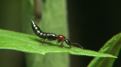 Ant wasp Stock Footage