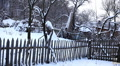 Winter 0087b Winter Season, Dog barking , Old House in Village in Snow HD Footage