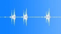 Screaming Piha (Lipaugus vociferans) - sound effect