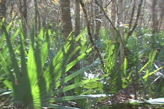 Palmetto Swamp Lost Stock Footage