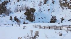 Wild turkey flock fly in winter snow HD Stock Footage