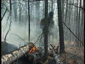Stock Video Footage of extinguish the fire in the woods