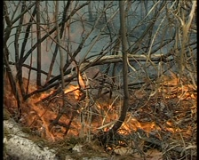 Forest grass fire - stock footage