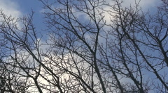Trees and sky - stock footage