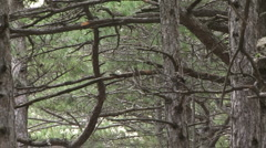 Beautiful virgin forest Stock Footage