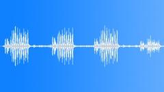 African songbird - sound effect