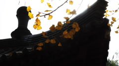 Autumn tree and chinese building Stock Footage