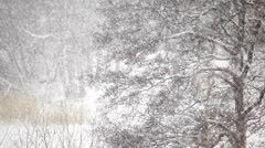 Snow falls in a forest - stock footage