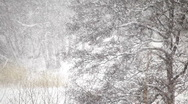 Stock Video Footage of Snow falls in a forest