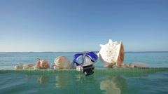 Diving goggles and shells Stock Footage