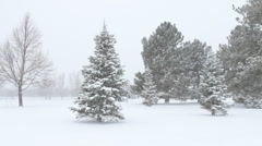 Holiday Snow Scenic - stock footage