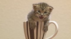 Mewing kitten in a teacup Stock Footage