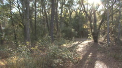P01327 Pan of Mississippi Bottomland Forest and Trail - stock footage