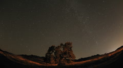 Wide night time lapse of star trails and Valley Oak Tree during a new moon Stock Footage