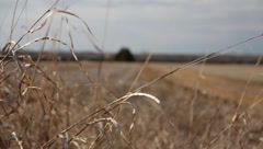 Mississippi Prairie 1 Stock Footage