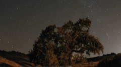 Night time lapse motion of star trails and Valley Oak Tree during a new moon Stock Footage
