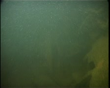 Sunken airplane under the water  Stock Footage