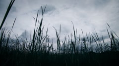 Cattails on the wind - stock footage